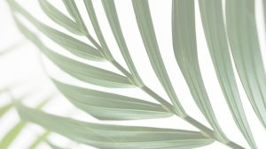 What is Your Response to Palm Sunday? | allinmin.org article