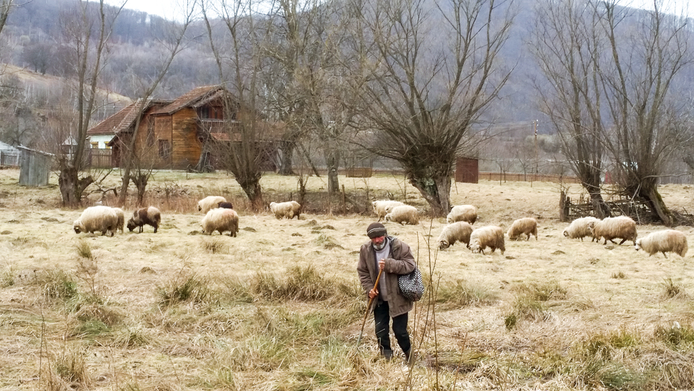God knows what we need - just like when we saw a shepherd leading his flock that we captured after leaving the All In Disciple-Making Conference in Romania.